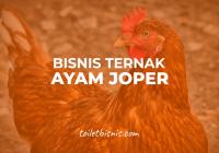 usaha ternak ayam joper