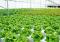tips usaha pertanian organik
