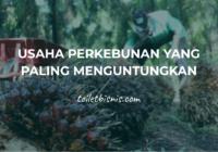 usaha perkebunan yang paling menguntungkan